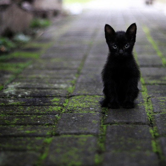 cat-3169476_1920.jpg