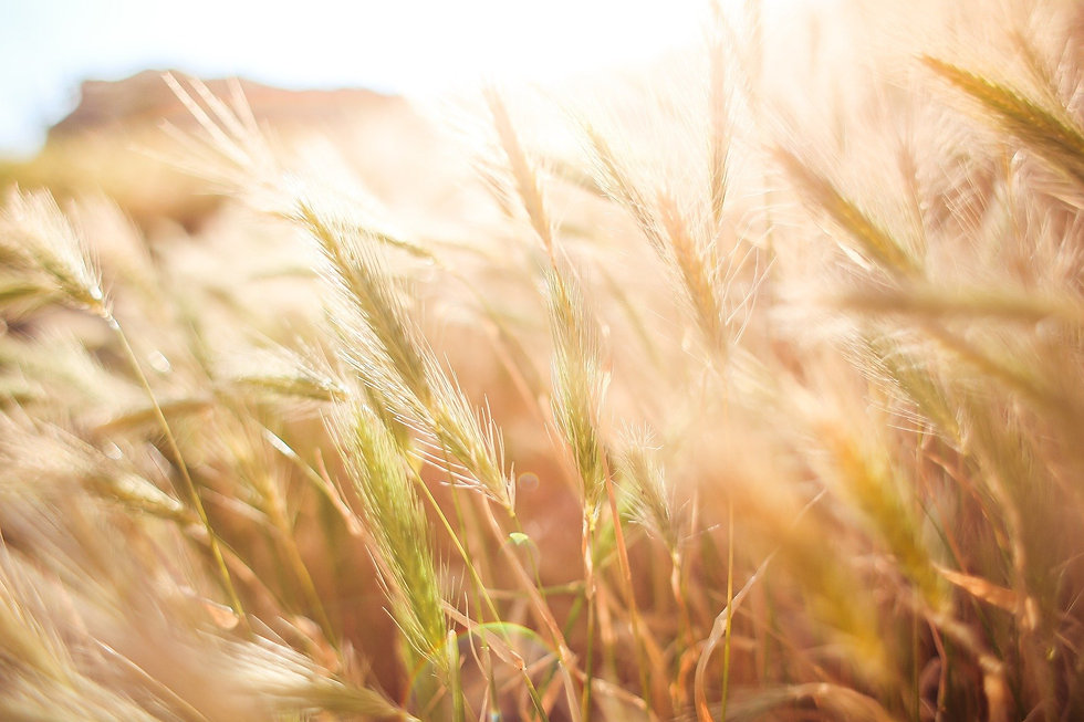 wheat-865098_1920.jpg