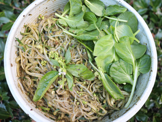 Kelp + Cucumber Noodles with Pesto