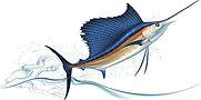 royalty free sailfish.jpg