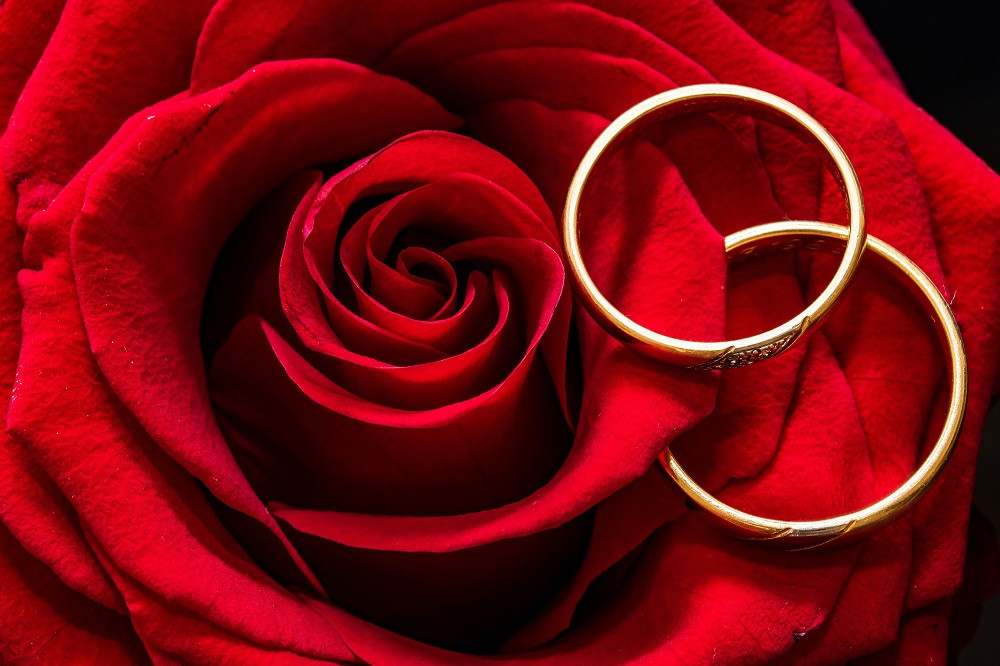 red rose and weddings rings