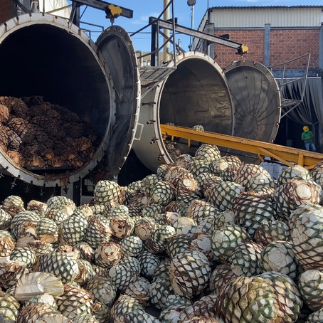 "Casa Maestri's Tequila Basics Vol. IV: ""Steam cooked from the heart"""