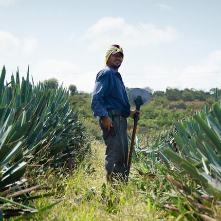 "Casa Maestri's Tequila Basics Vol. III: ""Jima, the Nahuatl word for shaving"""