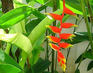 Khao Lak, Thailand, Bird of Paradise Flower
