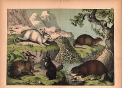 Bunnies and a Beaver