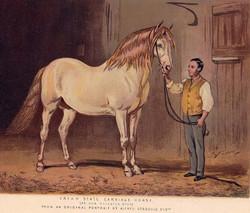 Cream State Carriage Horse