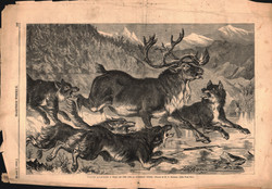 Wolves attacking a Stag