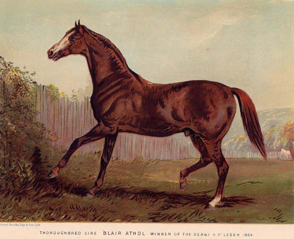 Thoroughbred Sire