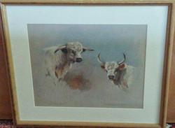 Chillingham Bull