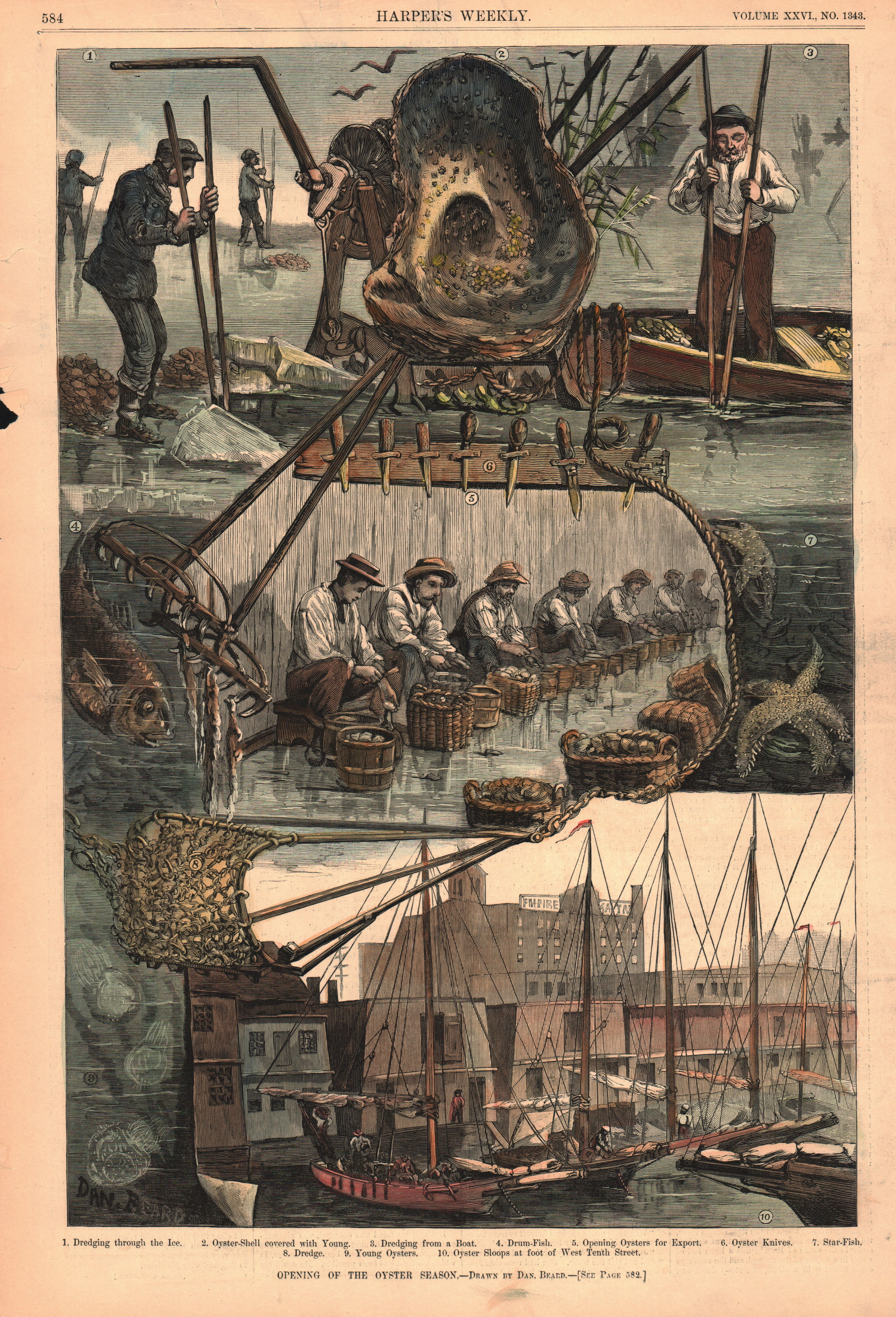 Opening of the oyster season