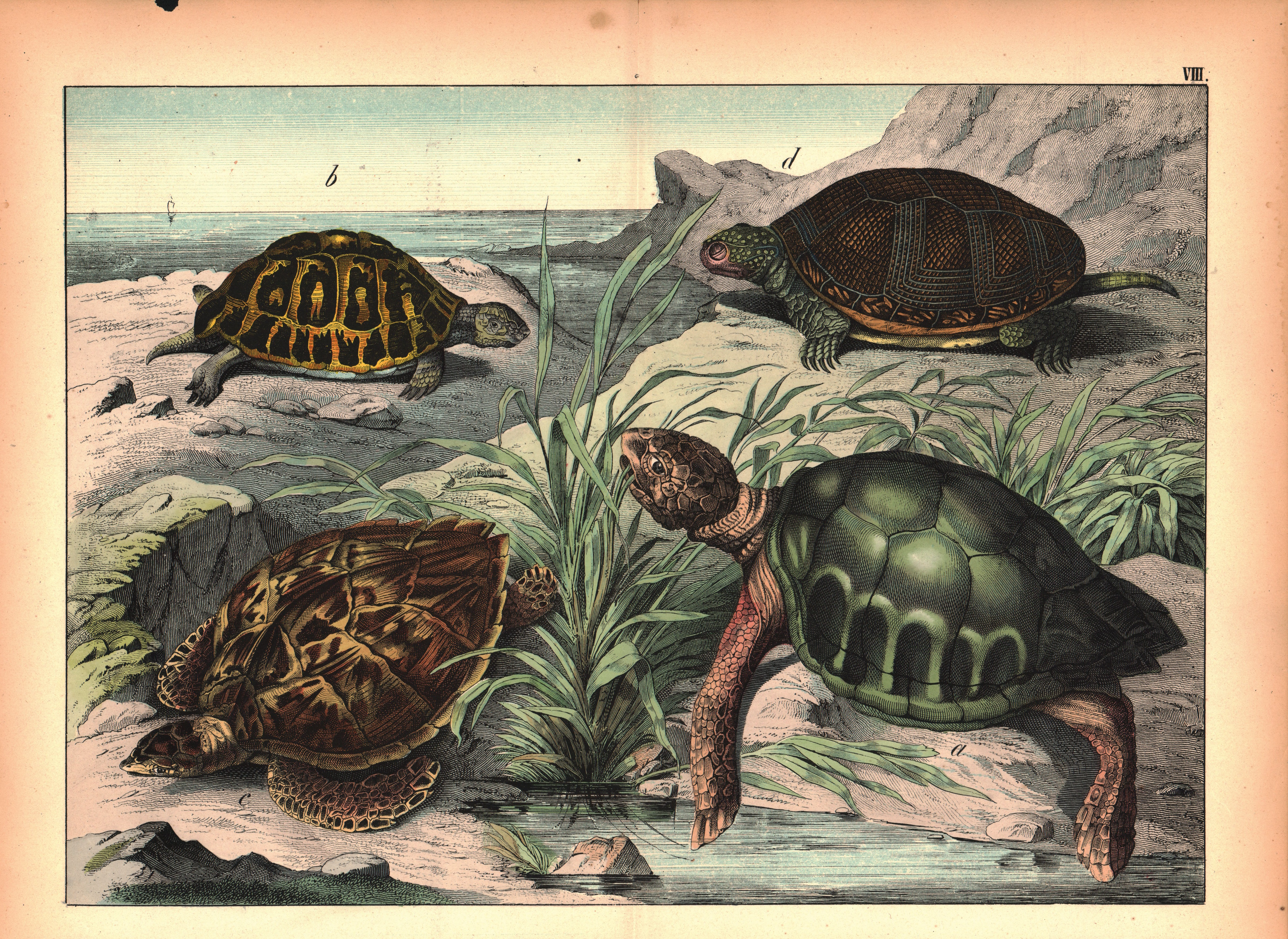 Types of Turtles