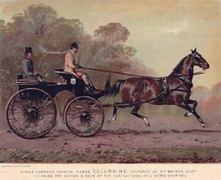 Phaeton Horse