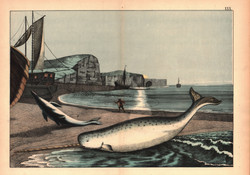 A Whale and a Fishermen