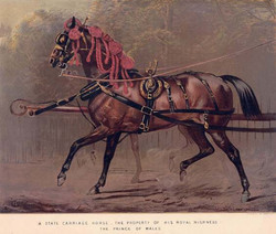 A State Carriage Horse
