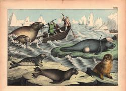 Seals, Walrus, Etc