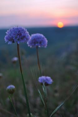 La Bastide Flowers