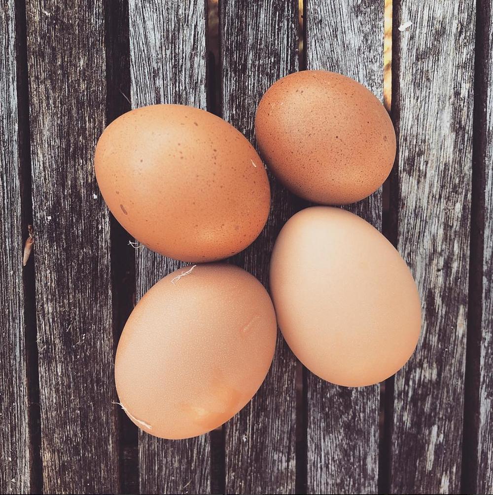 Eggs!
