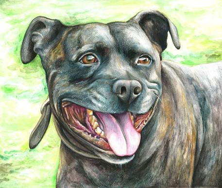 Pet Portrait 'Gus'