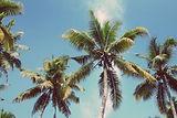Palm%20Trees_edited.jpg