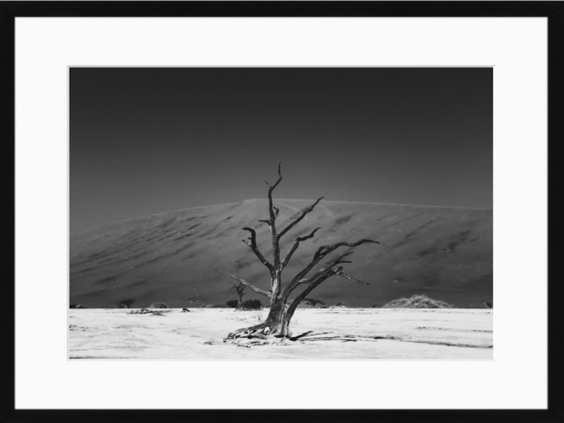 11. Dead Tree