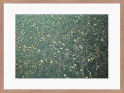 05. Autumn Leaves