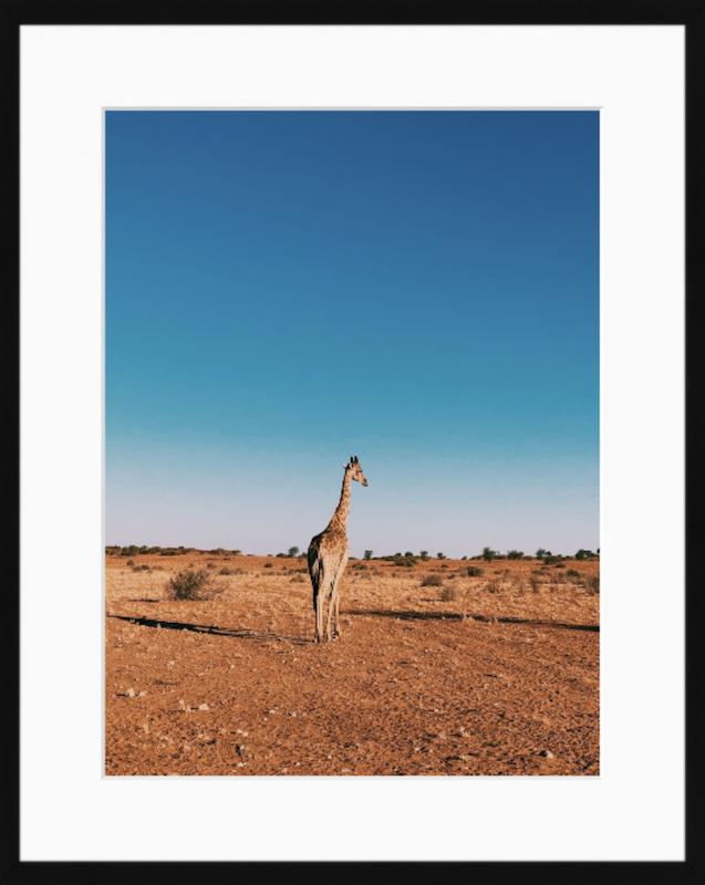 10. Giraffe