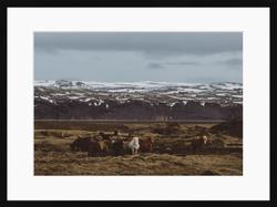 02. Icelandic Horses & Glacier