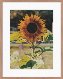03. Sunflower and Bee