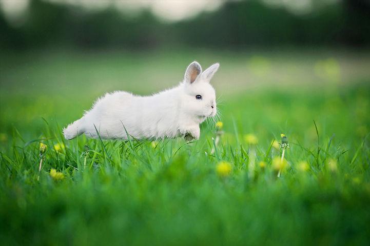 Little funny rabbit running on the field