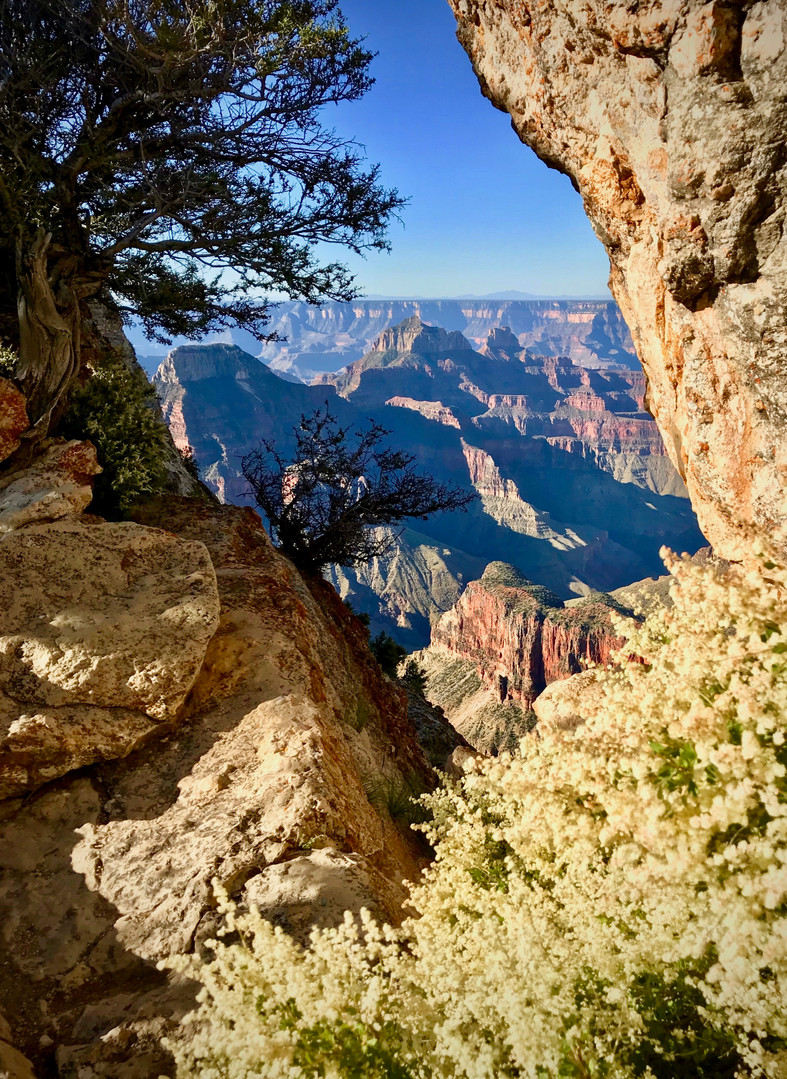 Peeking out between rocks on Bright Angel Point, along the Grand Canyon's North Rim.