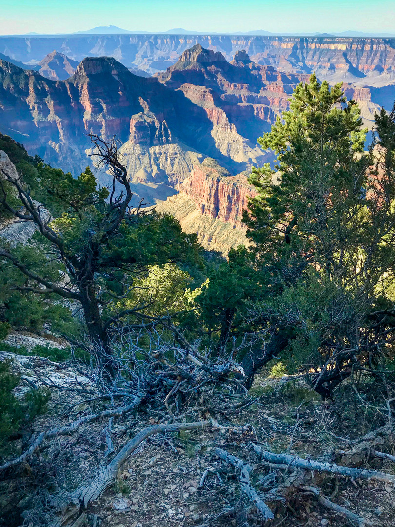 Looking out over a trail running along the North Rim.