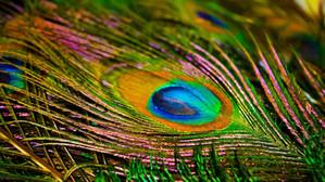 Un arc-en-ciel de plumes à peindre ou dessiner…