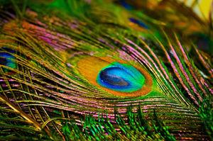 Peindre Et Dessiner Des Oiseaux
