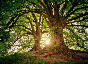 Merveilleuses forêts...