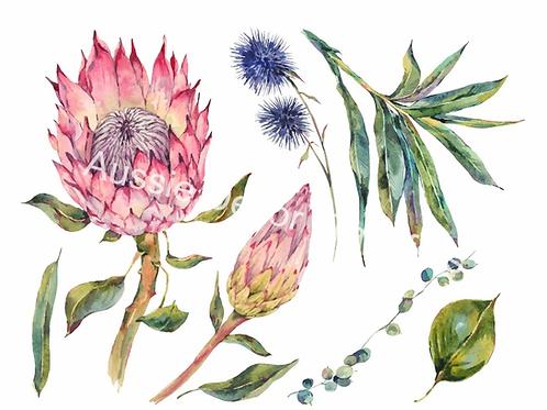 Australian Wildflowers II - Proteas