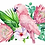 Thumbnail: Pink Galahs