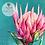 Thumbnail: Australian Wildflowers II - Proteas