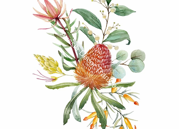 Australian Wildflowers I - Banksia