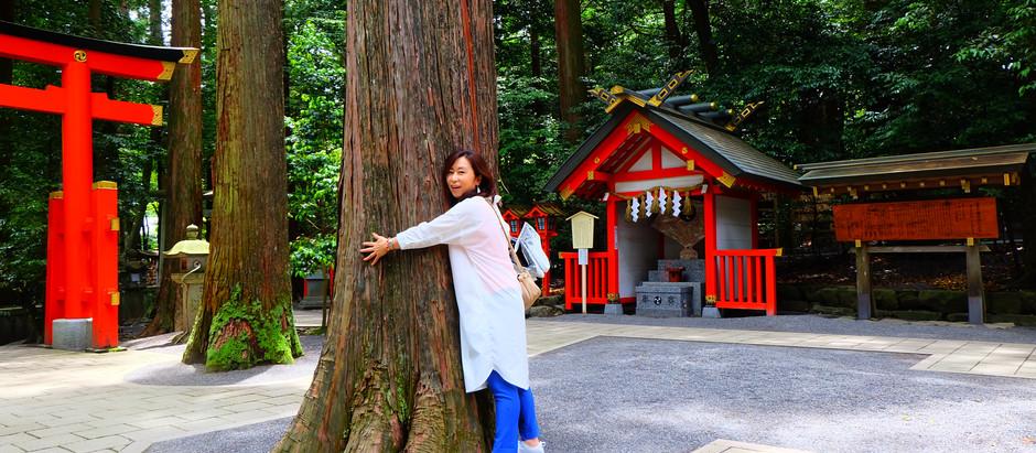 【三重】椿大神社(つばきおおかみやしろ)は気品高いスッキリした気が満ちる神域。