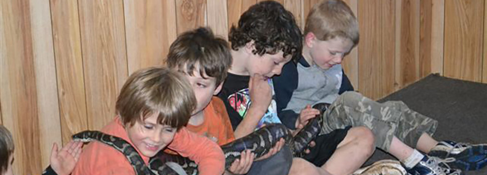 Snake Encounter - Activity available for booking