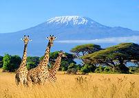 kilimanjaro-amboseli-1000.jpg
