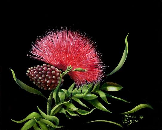 pink bloom, bushy flower bloom, swamp flowers