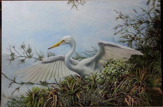 white egret, egret's nest, spanish moss, pine tree