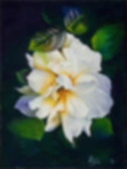 YELLOW ROSE, FLOWER, ROSE, CARDENIA, WET PETALS, WHITE ROSE, OIL PAINTING OF A ROSE, water drops