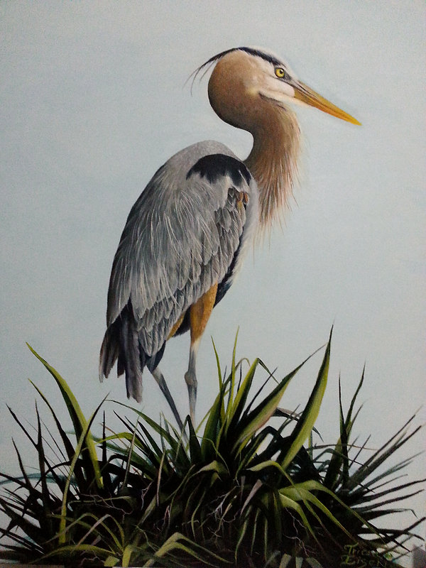 GREAT BLUE HERON, HERON, NESTING HERON, GREY BIRDS, SOUTHERN BIRD, PALM TREE, LARGE BIRD, oil painting of a heron