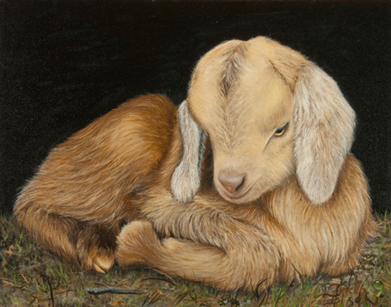 BABY GOAT, GOAT, KID, FARM ANIMAl. oil painting