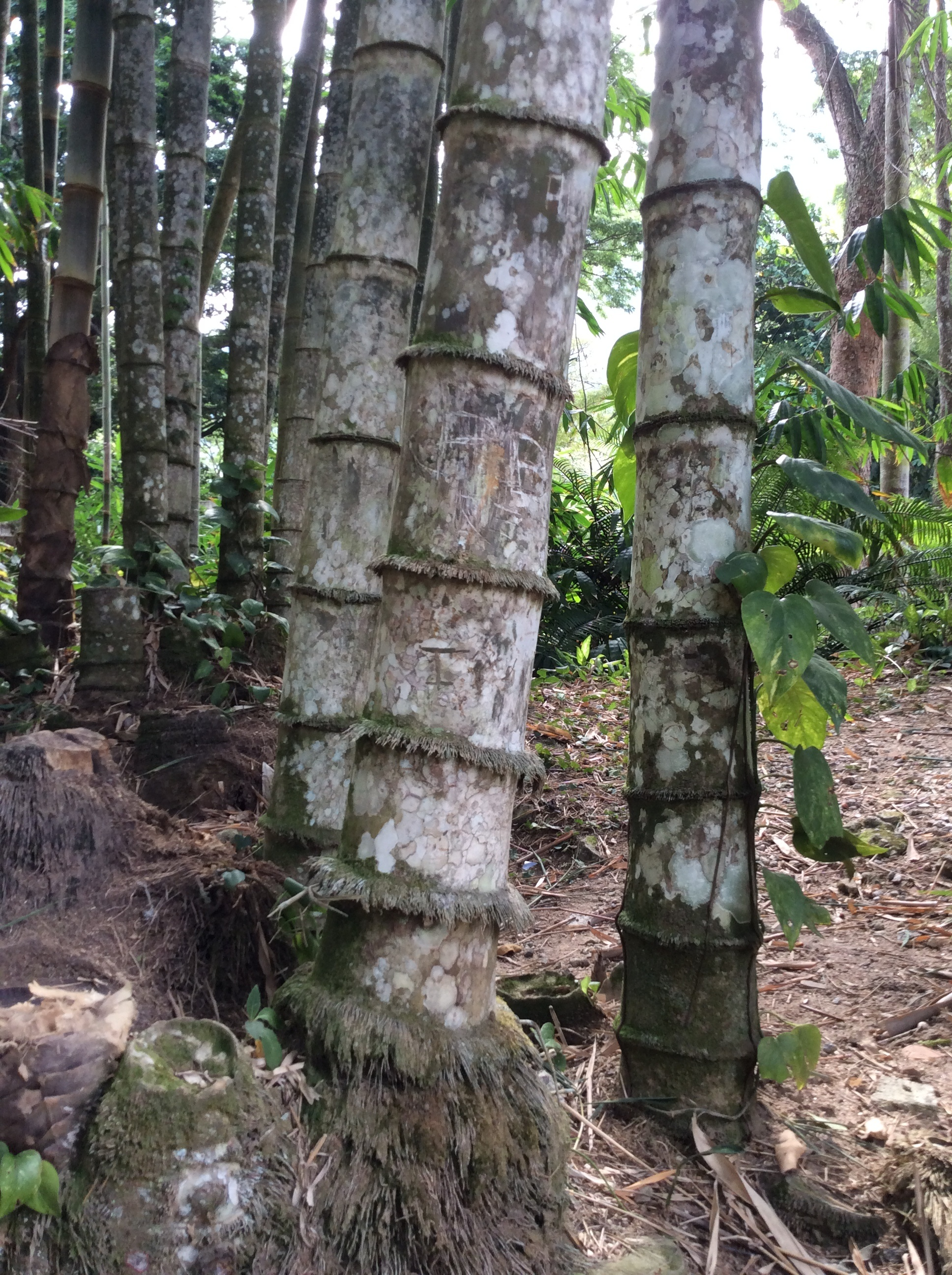AMAZZONIA IN CITTÀ