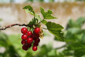 fruit-2242678_960_720.jpg