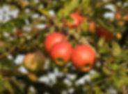 apple-3689375_960_720.jpg