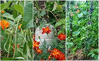 polyculture 3.jpg
